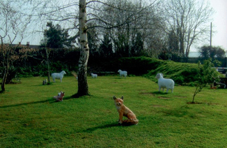 animal-statues-2