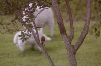 lamb-mum