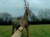 dog-wicker-stag